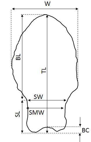 Loponte et al Fig 4 -ed